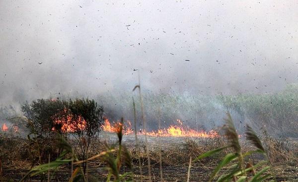 حدود ۱۰ هکتار از نیزارهای تالاب انزلی در آتش سوخت/ممکن بود فاجعه رخ دهد!