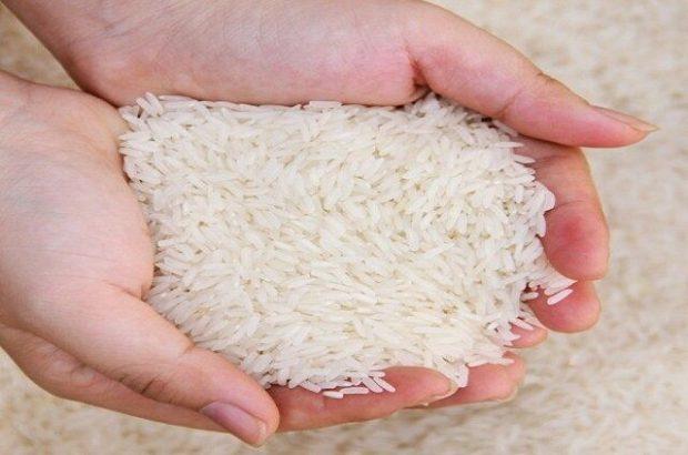 آخرین قیمت برنج سفید و شلتوک