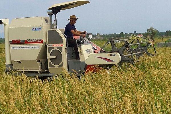 برداشت ۹۸ درصدی خوشههای طلایی برنج در گیلان