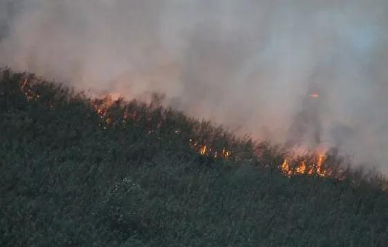 آتش همچنان بر جان تالاب زبانه میکشد/ اطفای حریق با کمک بالگرد